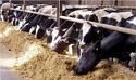 """Професионален производител с опит /животновъдна ферма от България/ търси Инвеститор {ROI = more 50%}, имам  одобрен проект и подписан договор с Държавен фонд """"Земеделие"""""""